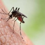 list of 14 diseases transmitted by mosquitoes