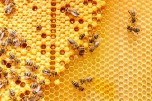 Health benefits of Bee Products (Honey, Beeswax, Pollen, Propolis, Bee Venom & Royal Jelly)