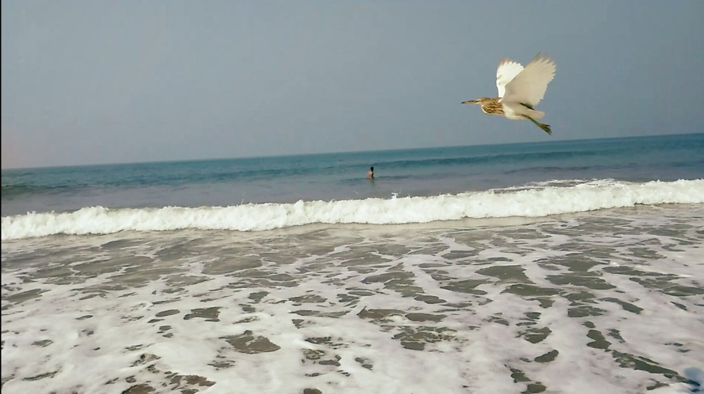 Birds at sea - Arambol Beach