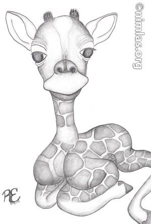 Daily Creativity: Baby Giraffe