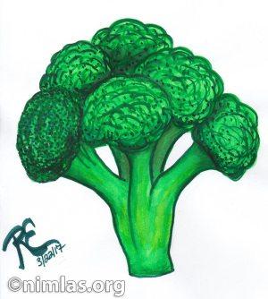 Daily Creativity: I Love Broccoli!!!