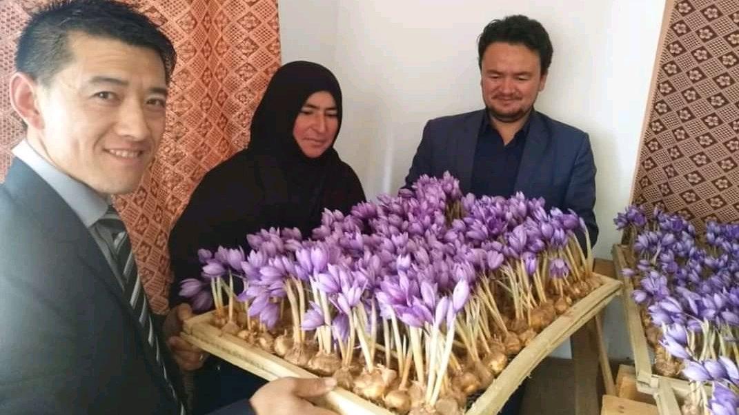 عبدالواحد فیروزی، رییس زراعت دایکندی، زینب موسوی با گلهای زعفرانش و مسؤول شرکت چینی که او را در پرورش زعفران حمایت کرده است.