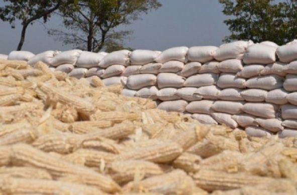 imported maize scandal in kenya
