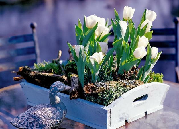 Træbakke, tilplantet med forår