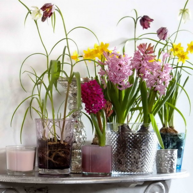 Forårsløg i glas og vaser