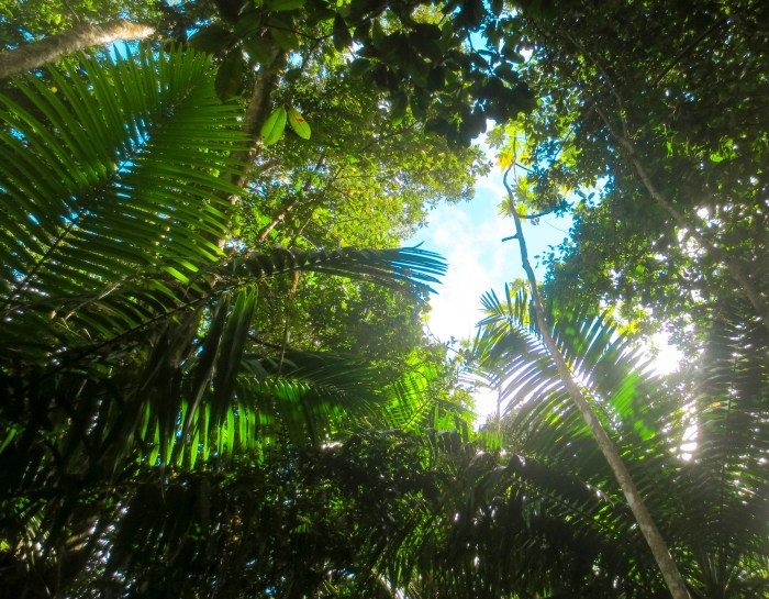 Hiking in El Yunque Rainforest: 6 Things to Know Before You Go