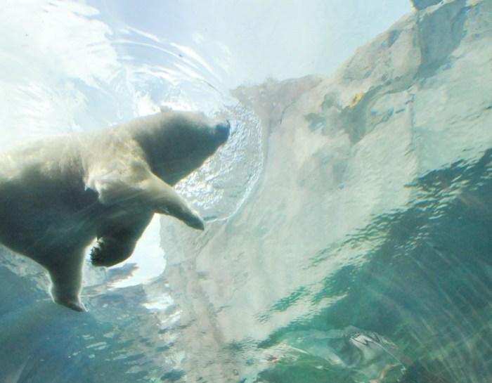 Journey to Churchill: Going Behind the Scenes at Assiniboine Park Zoo