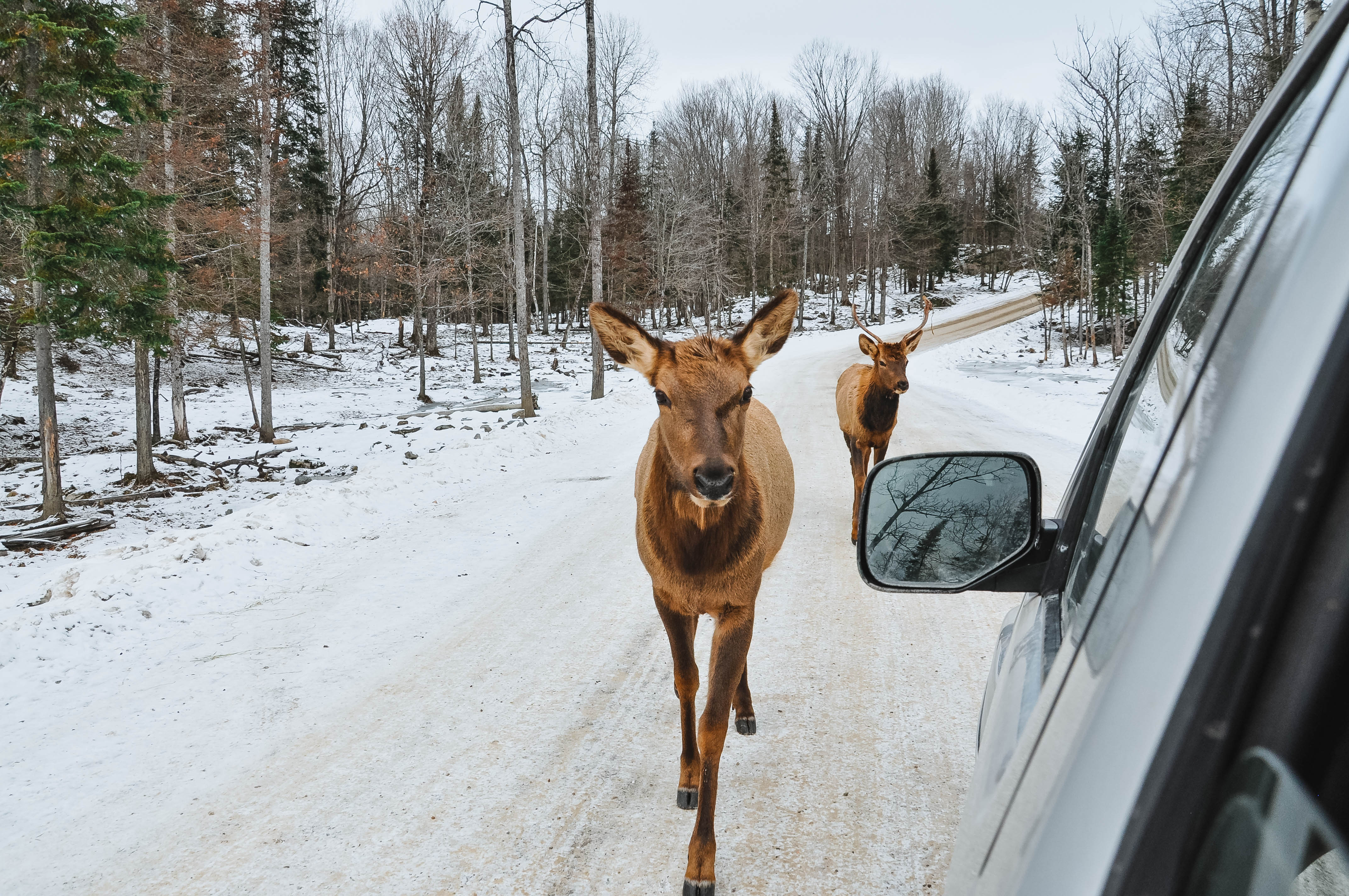 Visiting Omega Park in Quebec, Canada in the Winter