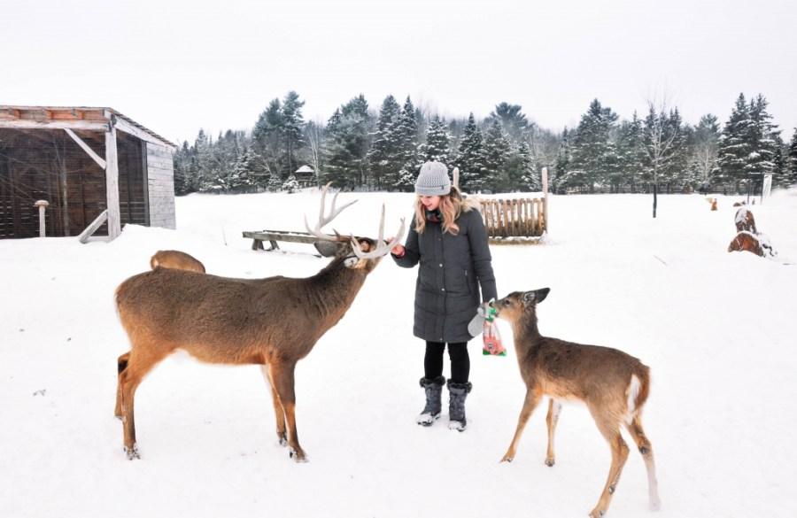 Omega Park in winter