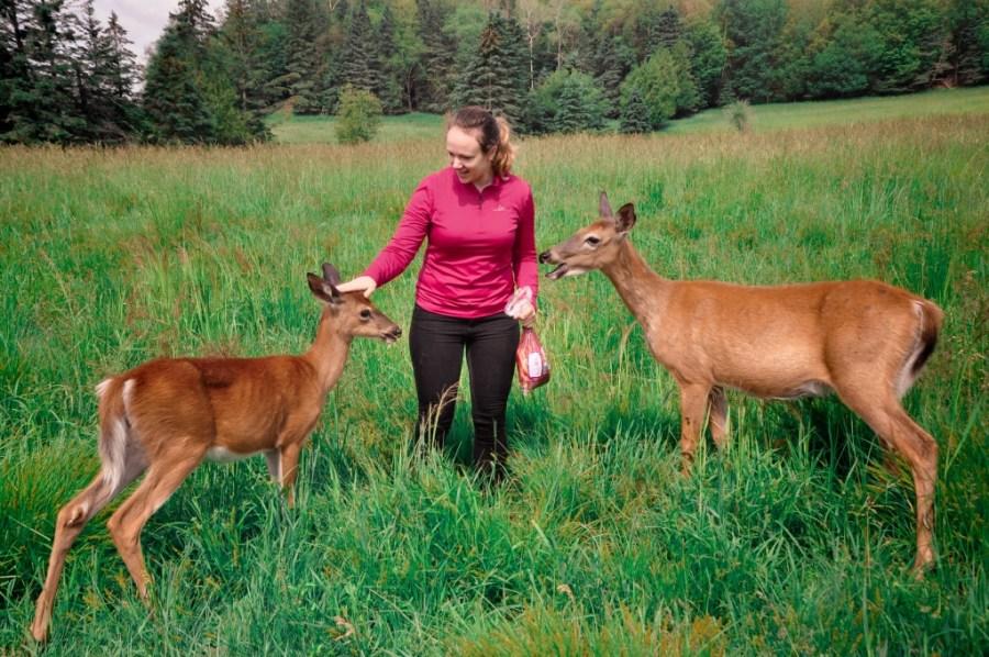 Feeding deer at Parc Omega