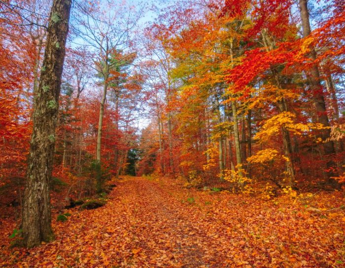 The Ultimate Gatineau Park Trails Guide