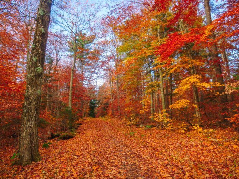 Gatineau park trail guide
