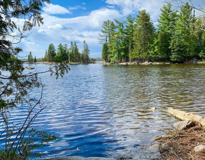 Day Trip Guide: Morris Island Conservation Area