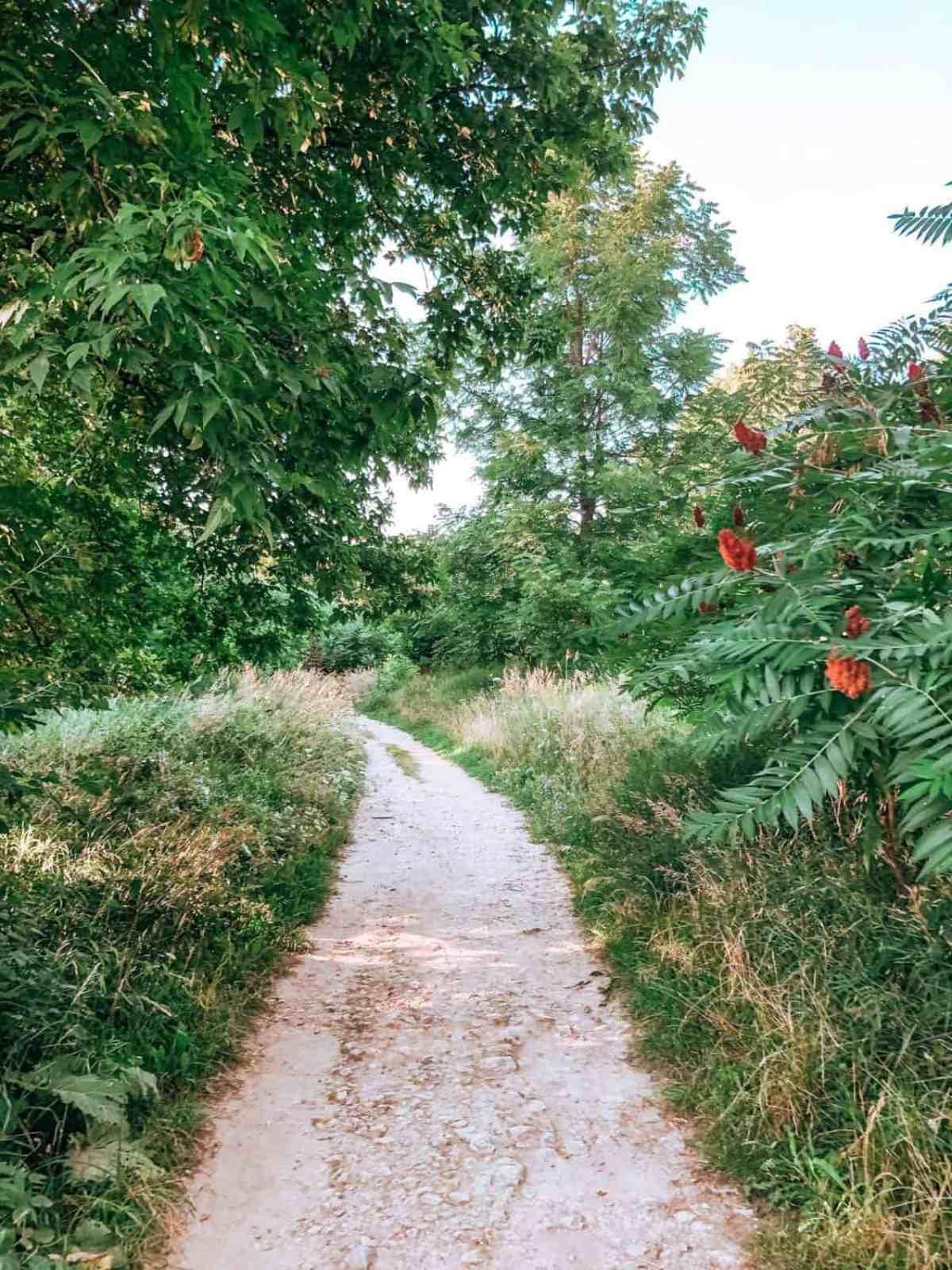 Scarborough Bluff's Hiking