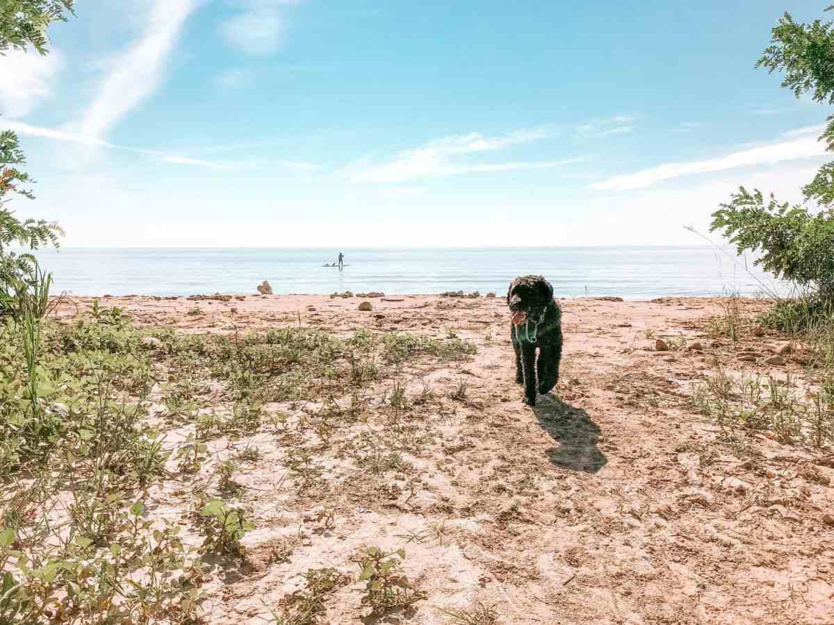 Scarborough Bluffer's Park Beach swimming with dog