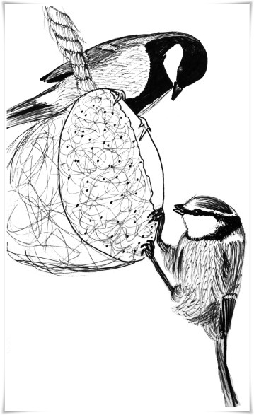 Great tit (above) and blue tit (below)