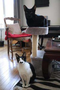 Domino et Dovahkiin