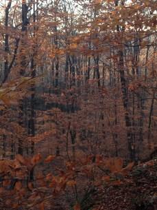 fall's yellow glow