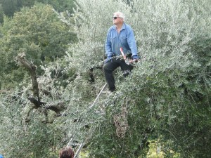 The Man...at the helm of the olive tree.