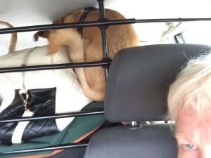 Jpeg on top of the luggage...poor dog