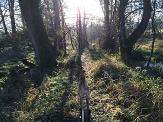 woodlandwalk