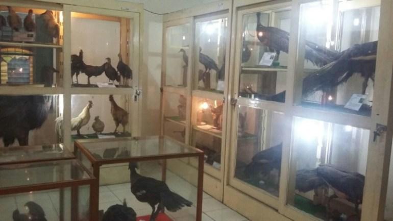 Koleksi Museum Biologi Jogja