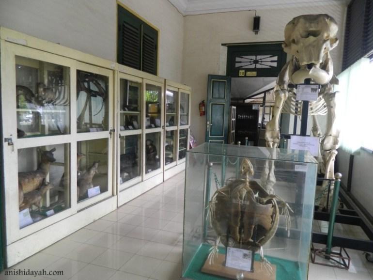 Ruangan di dalam Museum Biologi UGM Jogja