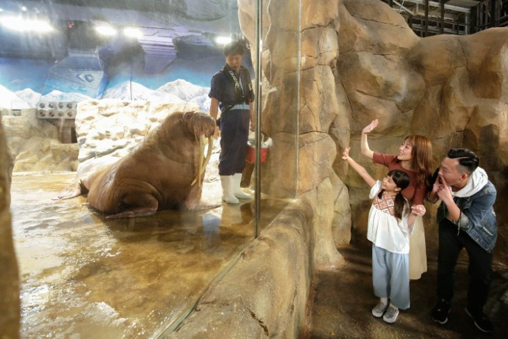 Ocean Park ADF 2019_Meet the Walrus