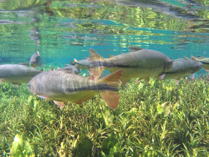 ウエアラブルカメラで撮った防水写真