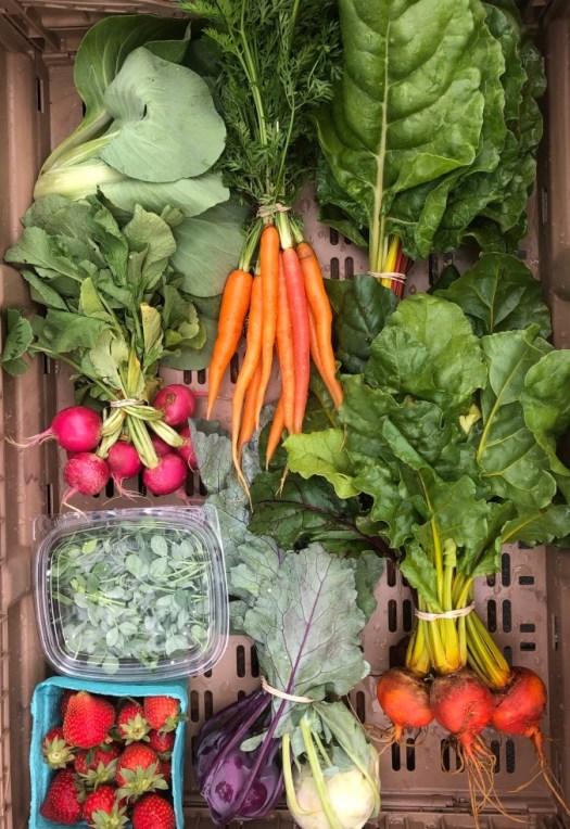 CSA vegetable box