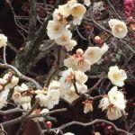 京都旅行 1泊2日コース、私が訪れた 梅花園~TOFU CAFE FUJINO