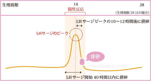 排卵日検査薬陽性LHサージ