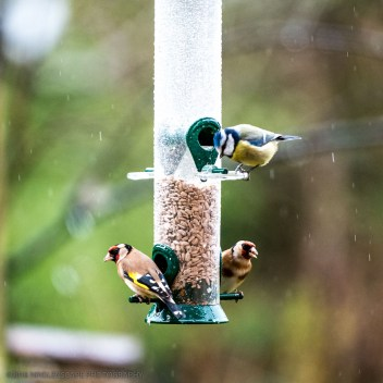 Variety of birds who happily help themselves to the food