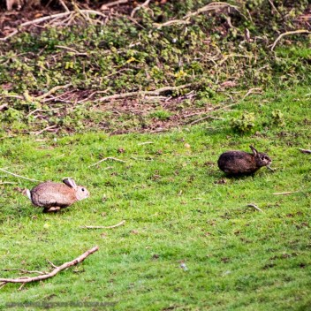 Rabbits love to play around in the back garden