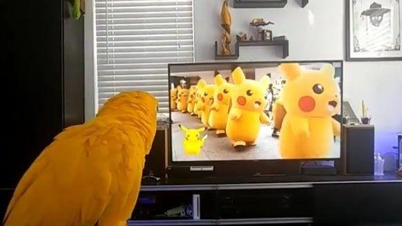 Video: Parrot Sings To The Rhythm Of The Pikachu Parade Song 33