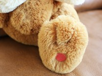pokecen-fluffy-pikachu-eevee-photo-8
