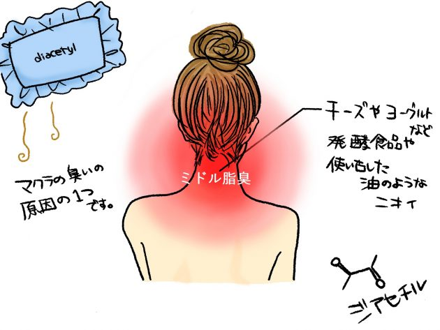 ミドル脂臭の発生部位とどんな臭いなのかを図解