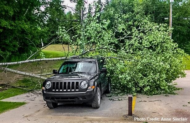 Aspen Grove Tree on car