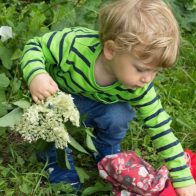Toddler picking elderflower for cordial - nipitinthebud.co.uk