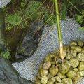 【水琴窟と筧の作り方】 〜日本庭園(枯山水・石庭)の作り方 その3〜
