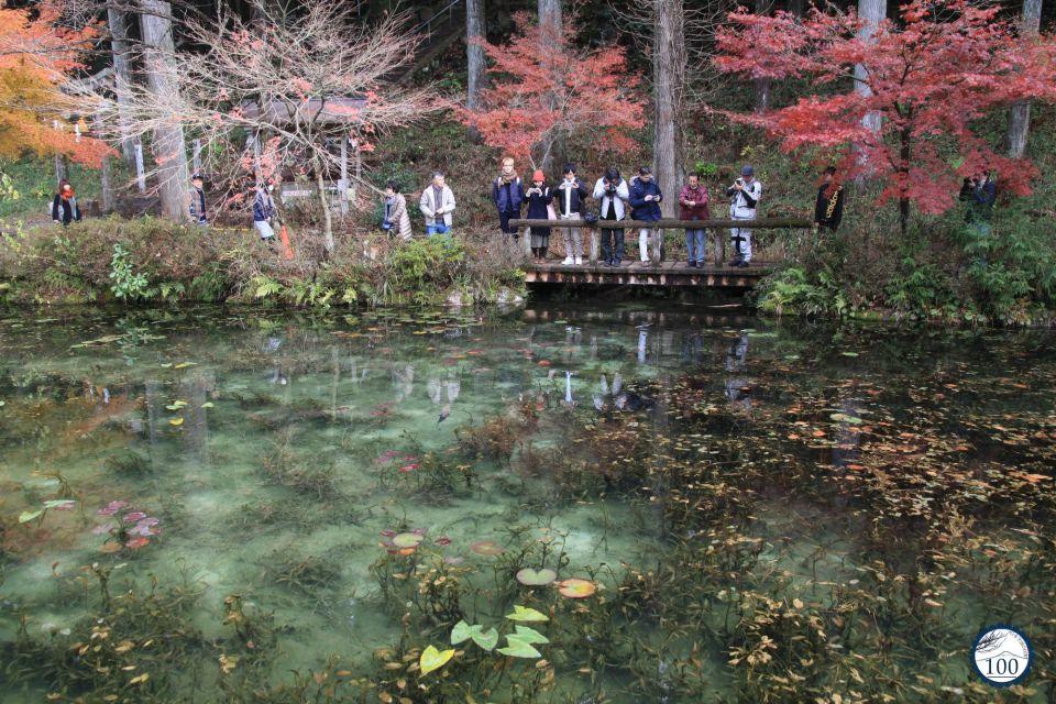 Monet's pond !