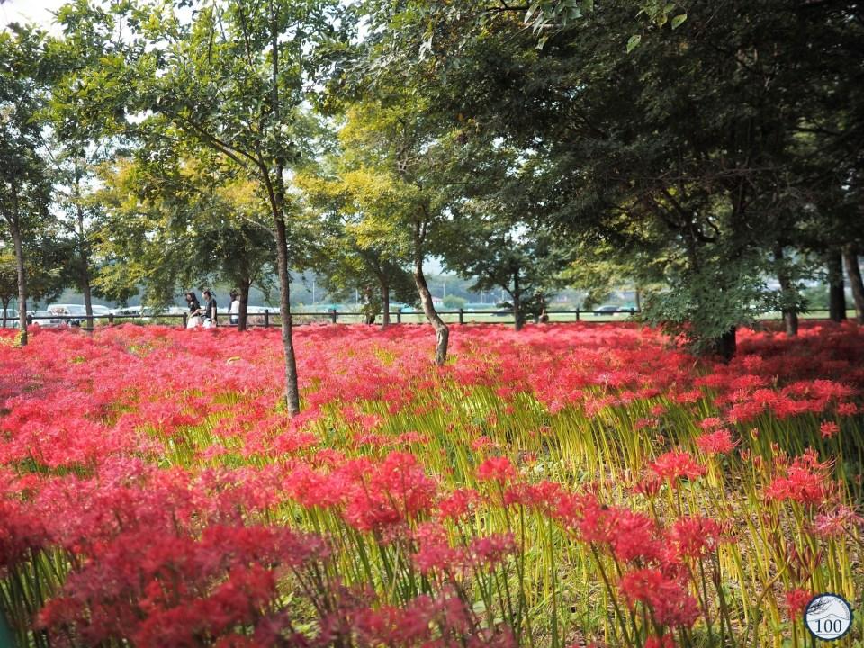 Kinchakuda - Saitama