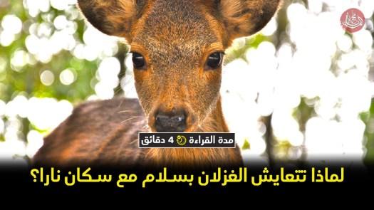 جنة الغزلان.. لماذا تتعايش الغزلان بسلام مع سكان نارا؟