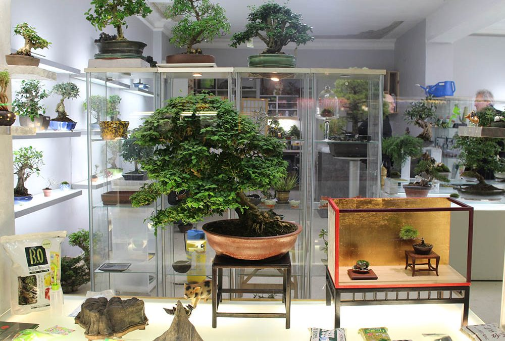 Bonsai Concept – Charlottenburg