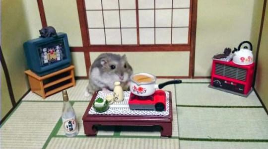 Hamsters, Restaurant, Actu Japon, Japon,