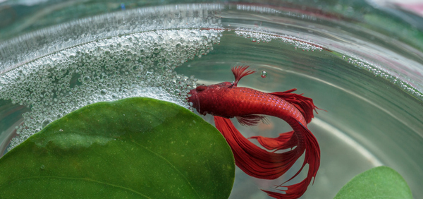 Image result for bubble nest