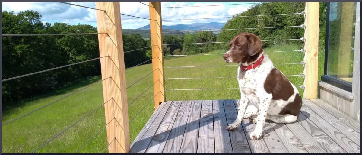 Milo the dog on a deck