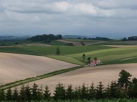 美瑛らしい丘の風景