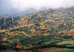 旭岳の紅葉