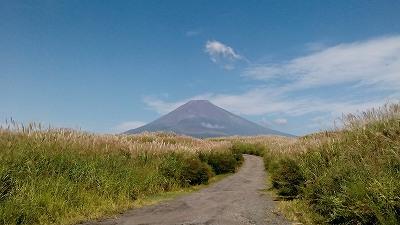 富士山 裾野 ススキ